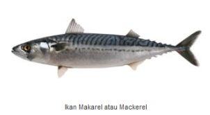 Ikan Laut Konsumsi - Ikan Makarel (Mackerel)