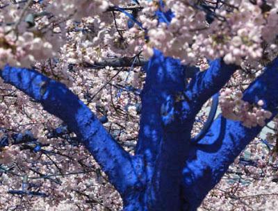 Arboles pintados de azul