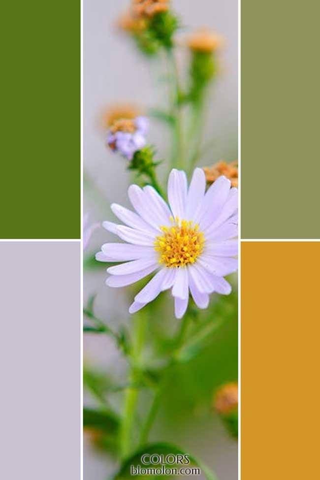 combinacion_novedades_de_color_7