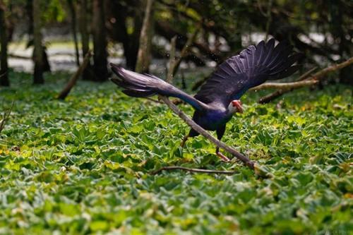 Ngắm chim đẹp ở U Minh Hạ