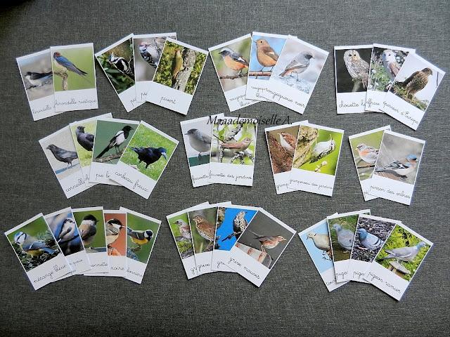 Cartes de nomenclature : Oiseaux des jardins