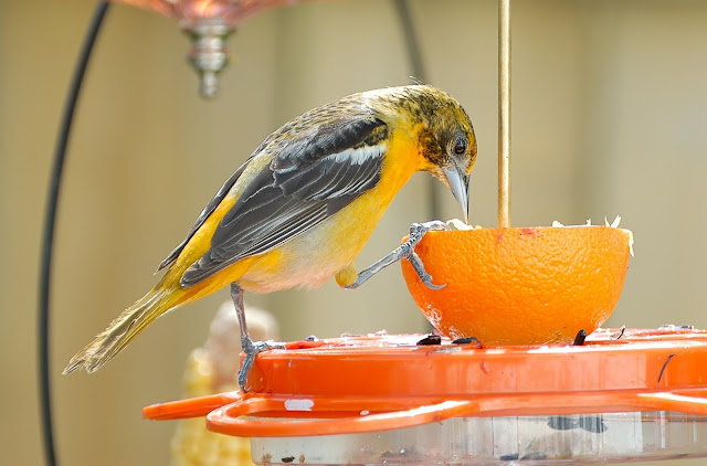 Orange Summer Bird Feeder Activity For Childrens Church