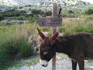 burros mallorca
