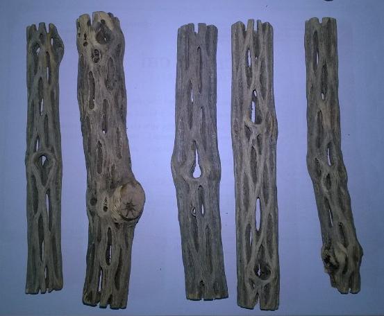 lũa cholla với hình dáng đặc trưng rất thích hợp cho hồ thủy sinh nuôi tép