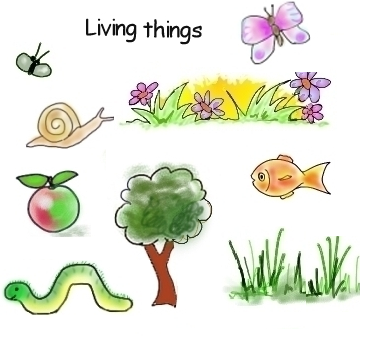 a description of living things and their environment