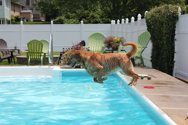 dog jumping in pool wordless wednesday