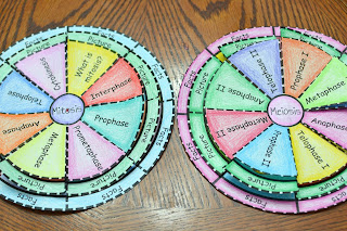Mitosis and Meiosis Foldables