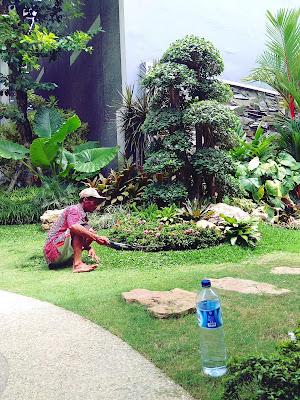 Tianggadha penyedia jasa pemeliharaan taman