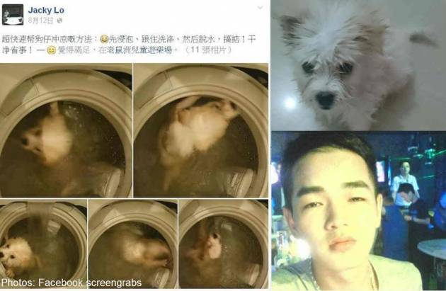 Chinese Teen Kills Dog in Washing Machine for Fun
