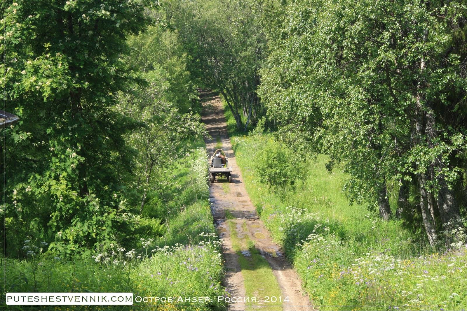 Дорога на острове Анзер и телега с лошадью