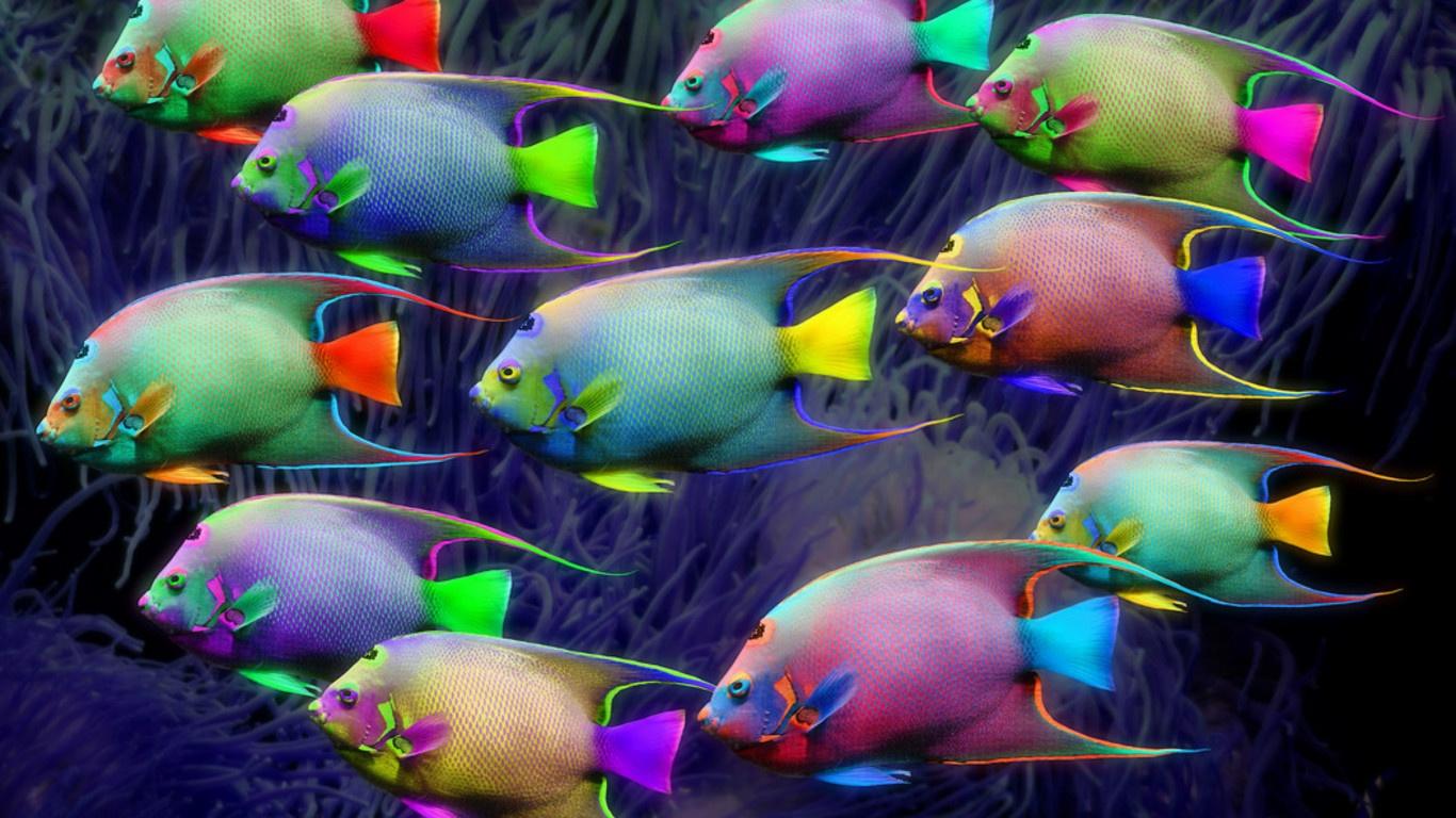 Blue planet heart pesci colorati neon for Immagini pesciolini