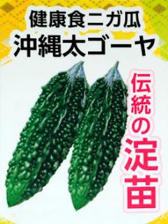 沖縄太ゴーヤ