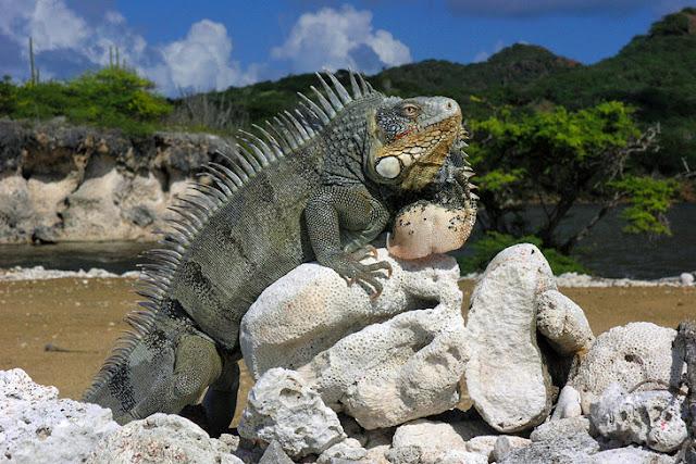 Washington-Slagbaai National Park, Bonaire