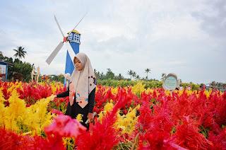 Wisata kebun bunga merasi