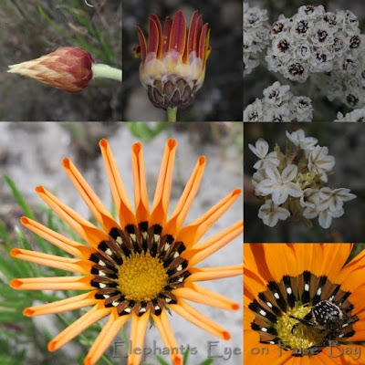 Daisies at Redhill in October