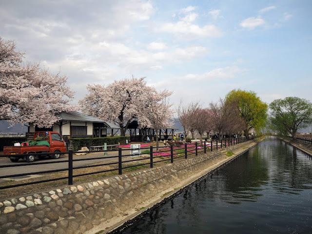 あづみ野やまびこ自転車道 拾ヶ堰 桜 じてんしゃひろば