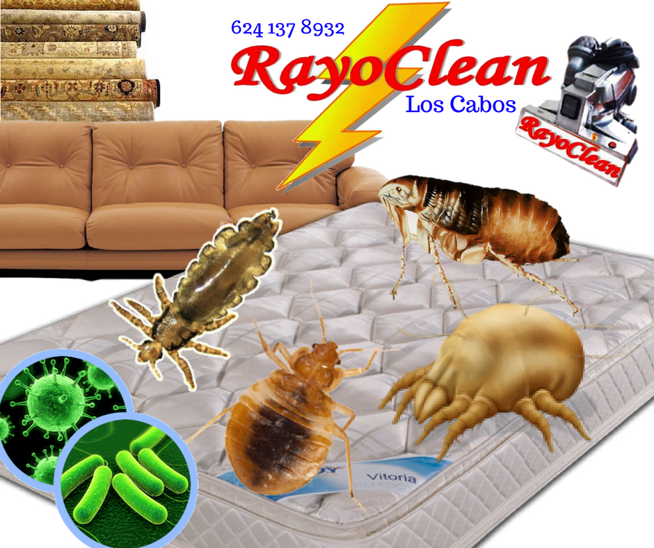 Rayo Clean Los Cabos,BCS: Total cleaning and disinfection of