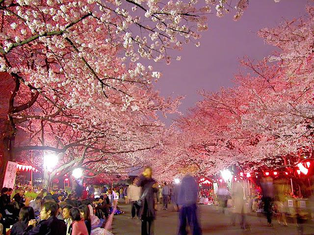 Ueno Sakura Matsuri, Cherry Blossom Festival at Ueno Park, Taito-ku, Tokyo