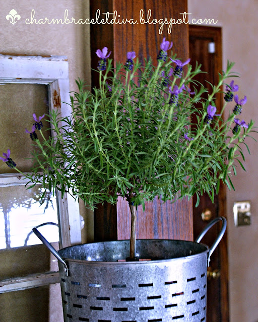 lavender topiary in olive bucket