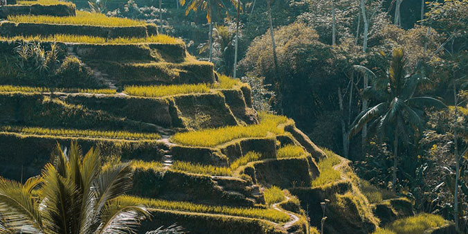 Bali Ubud One Day Tour