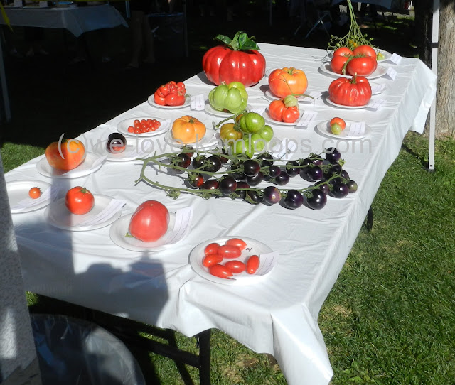 Varieties of tomatoes show entrants for the competition
