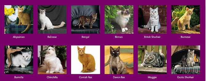 7 Langkah Mudah Merawat Kucing di Rumah