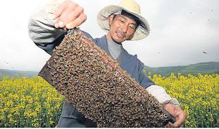 Πολλές χώρες αγοράζουν κινέζικο μέλι και το αναμιγνύουν με το δικό τους για να αυξήσουν τα κέρδη τους