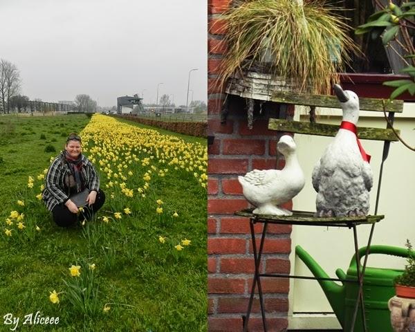 olanda-groningen-oras