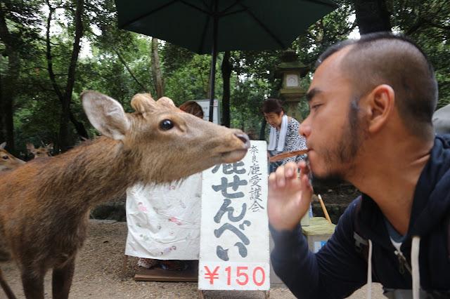 Marky Ramone Go in Nara Deer Park