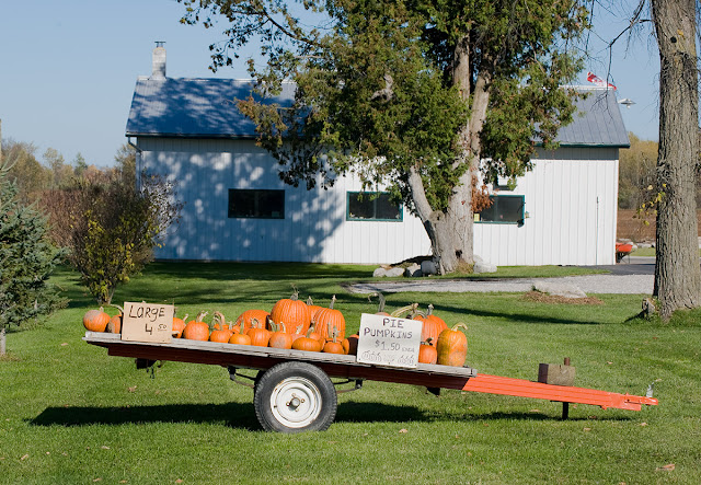 A farm trailer loaded with pumpkins for sale in the autumn.