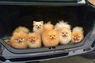 foto tierna de perritos,
