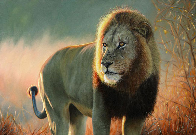 Animal Print Wallpaper Uk My Top Collection Lion Pictures To Print