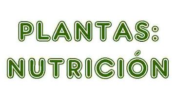https://cplosangeles.educarex.es/web/quinto_curso/naturales_5/plantas_nutricion_5/plantas_nutricion_5.html