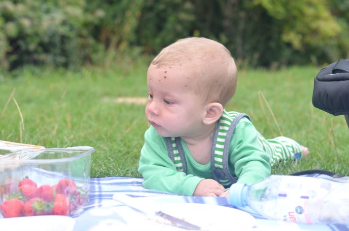 weaning, baby picnic, baby strawberries, 6 month old