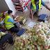 Proses packing hasil panen bumi Palestina yaitu buah Apel Merah dan Apel Kuning