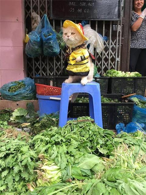 Hoàng thượng bán thịt, rau