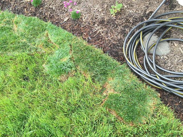 sod scraps on top of grass