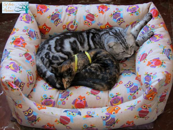 10 Cosas Que Tu Gato Necesita
