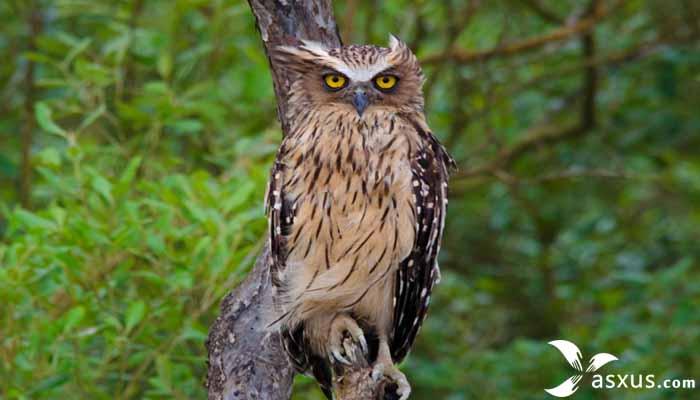 9 Makanan Burung Hantu Berdasarkan Jenisnya dan Cara Merawatnya