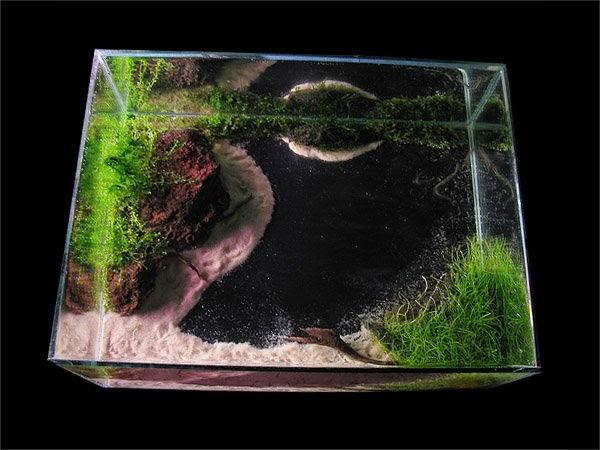 Hồ thủy sinh hiệu ứng ao - nhìn từ trên xuống