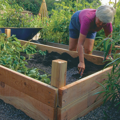 Raised Vegetable Garden in Applicable Steps