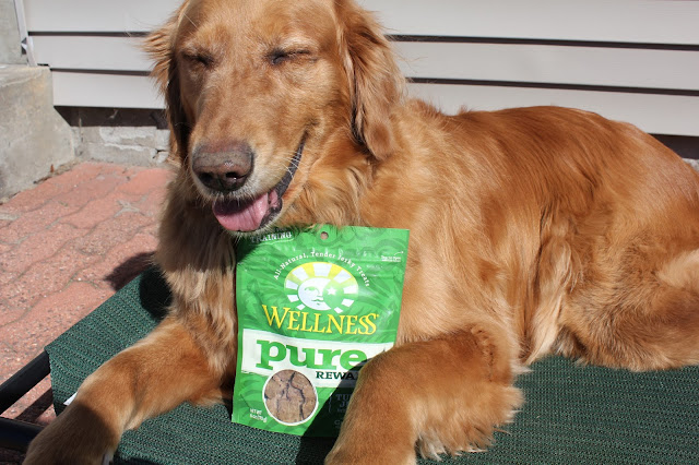 Wellness Pure Rewards Grain-Free Jerky Treats Review #ChewyInfluencer