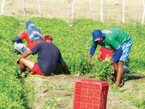 Produtores discutem meios para aquecer o setor agrícola no Cariri