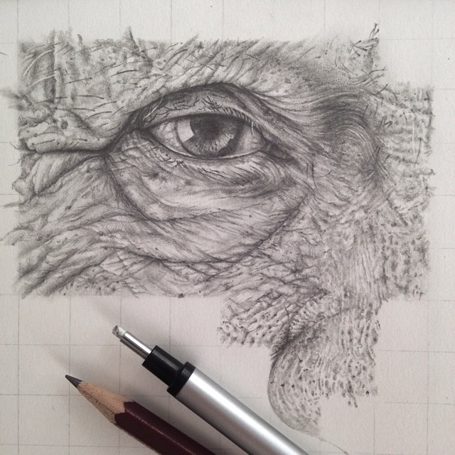 05-Beauty-comes-with-Age-Detail-Monica-Lee-zephyrxavier-Eclectic-Mixture-of-Pencil-Wild-Life-and-Portrait-Drawings-www-designstack-co