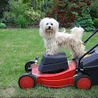 5 Things To Do When Your Dog Hates Your Lawn Mower         |          PetHomeStay
