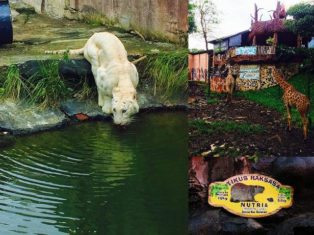 koleksi hewan batu secret zoo