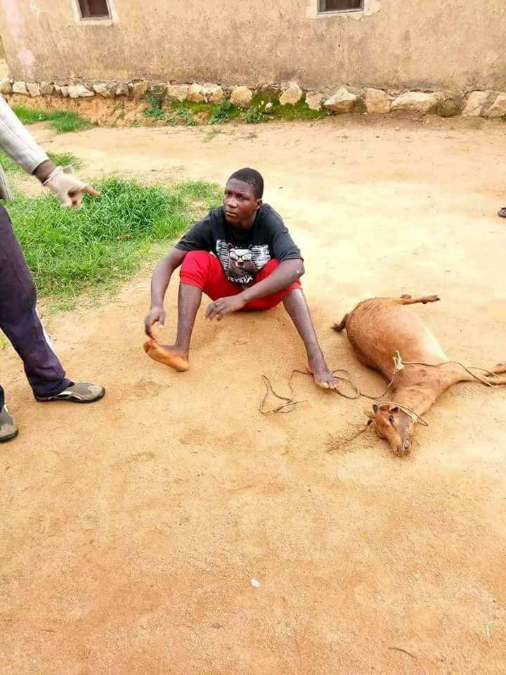Young man raped goat to death in Nigeria