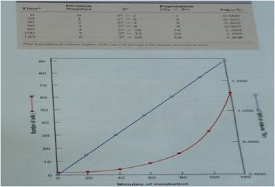 Pertumbuhan Eksponensial Populasi Mikrobia, A. contoh penggandaan sel mikrobia yang membelah setiap 20 menit, B. grafik penggandaan sel mikrobia, garis merah dalam skala Aritmetik dan garis biru dalam skala Logaritmik.