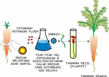 Artikel Biologi Tentang Bioteknologi