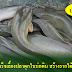 สูตรสำเร็จเลี้ยงปลาดุกในบ่อดิน สร้างรายได้ปีละเป็นล้าน !!